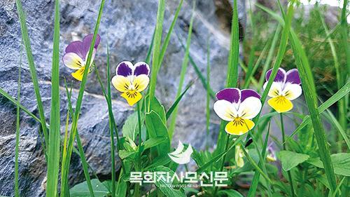 16면-꽃4.jpg